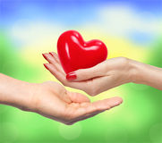 Red heart in woman hand and man handover blurred nature. Background Royalty Free Stock Image