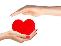 Red heart in woman and man hands isolated Stock Photos