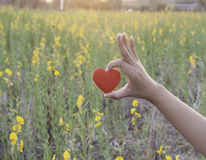 Red heart on woman's hand on flower garden background. Love and Stock Image
