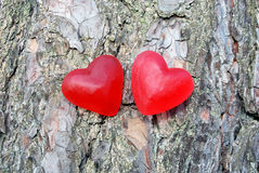 Red hearts. Red jelly hearts on a tree Royalty Free Stock Image