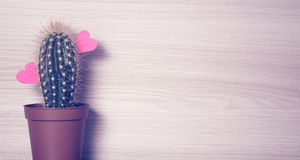 Red hearts with a cactus Stock Image