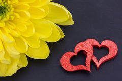 Red hearts and a chrysanthemum Stock Photography