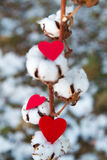 Red hearts and gossypium. On winter background Stock Image