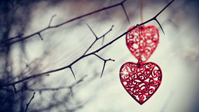 Red hearts on prickly branches. Royalty Free Stock Photo