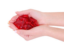 Red hearts in woman hands isolated on white Royalty Free Stock Image