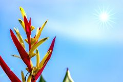 Red Heliconia Flower in Blue Sky with Star-shaped Sun. Image of red heliconia flower in the blue sky background with star-shaped sun and flares royalty free stock photography