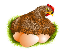 Red hen with eggs Stock Photo