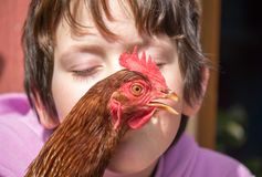 Close up of hen recieving a kiss while postioned in front of you royalty free stock image