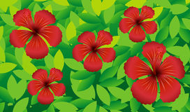 Red hibicus flowers in the bush Stock Photos