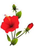 Red Hibiscus. Raster illustration of a branch of red tropical hibiscus Royalty Free Stock Photography