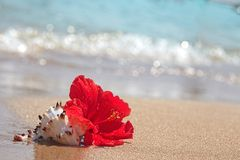 Red hibiscus on the beach Royalty Free Stock Photo