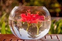 Red hibiscus flower Stock Photos