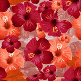 Red hibiscus flower. Seamless floral background Royalty Free Stock Photos