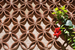 Red hibiscus flower on terracotta grid Royalty Free Stock Photo