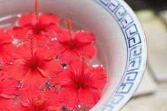 Red Hibiscus flowers floating on water inside big bowl Royalty Free Stock Images