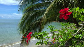 Red Hibiscus Flowers with Palm Trees Brazilian Beach. Bright red hibiscus in the breeze in front of palm tree on tropical beach in Northeastern Brazil stock video