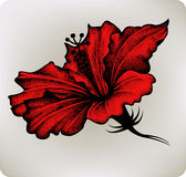 Red hibiscus, hand-drawing. Vector illustration. Stock Photo