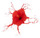 Red hibiscus with splashes Royalty Free Stock Photos
