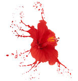 Red hibiscus with splashes Royalty Free Stock Images