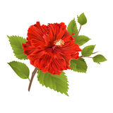 Red hibiscus stem  tropical flower on a white background vintage vector Stock Images