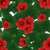 Red Hibiscus syriacus - Rose of Sharon isolated on White Background. Vector Illustration.  vector illustration