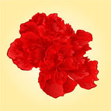 Red hibiscus tropical flowers vector Royalty Free Stock Image