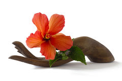 Red hibiscus on a wooden hand statuette. A beautiful fresh hibiscus flower on a wooden hand statuette Royalty Free Stock Images