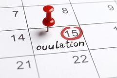 Red highlighter with ovulation day mark on calendar stock images