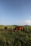 Red Hill horse farm Royalty Free Stock Images