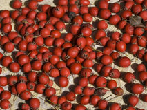 Red hips. Berries of dog rose on bagging background Royalty Free Stock Photography