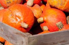Red Hokkaido pumpkins Stock Photography