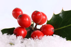Red holly berries in the snow Stock Photos