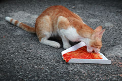 Red homeless cat eats pizza on asphalt Stock Image