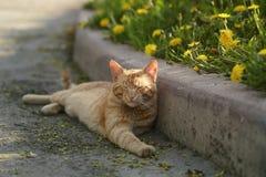 Red homeless cat resting on sidewalk Stock Photo