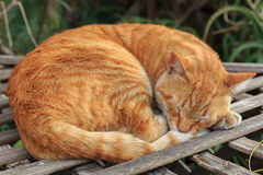 Red homeless cat Royalty Free Stock Image