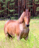 Red horse against wood Stock Photo