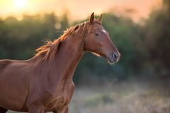 Free Red Horse At Sunset Light Stock Images - 129533034