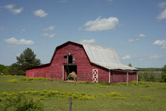 Red Horse Barn. Red barn in a field of yellow flowers royalty free stock image