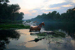 Red horse bathed at night Stock Photo