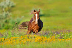 Red horse in flowers Royalty Free Stock Images