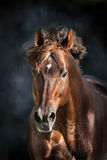 Red horse with long mane. Portrait in motion on dramatic dark background stock photos