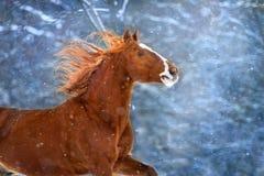 Horse in snow stock photos