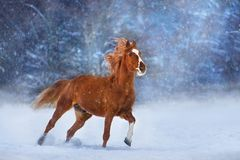 Horse in snow stock images