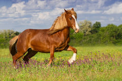 Red horse in motion Royalty Free Stock Image