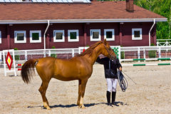 Red horse in a paddock. Pure bred chestnut horse with trainer in a paddock Stock Photo