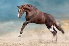Horse in sand Stock Images