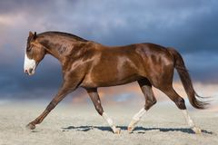 Free Red Horse Run Trot Royalty Free Stock Photo - 124406365