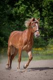 Red horse running to the green meadow Royalty Free Stock Photos