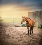 Red horse on sand paddock on sunset Stock Photo