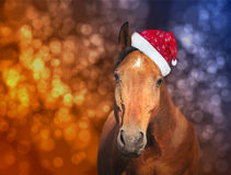 Red horse in  Santa hat on Christmas background with bokeh Royalty Free Stock Images